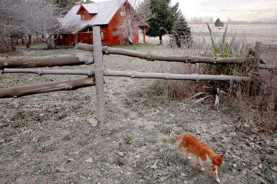 Un gato camina por el campo de una casa cubierto de ceniza en San Martín de los Andes. Foto: Reuters