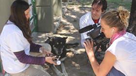 El perro que alcanzó fama por su fidelidad al amo muerto es objeto de un informe para la televisión francesa