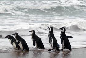 La colonia de Punta Tombo es uno de los atractivos turísticos de Chubut