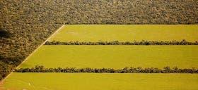 En el departamento San Martín, las plantaciones de soja reemplazan poco a poco al monte natural