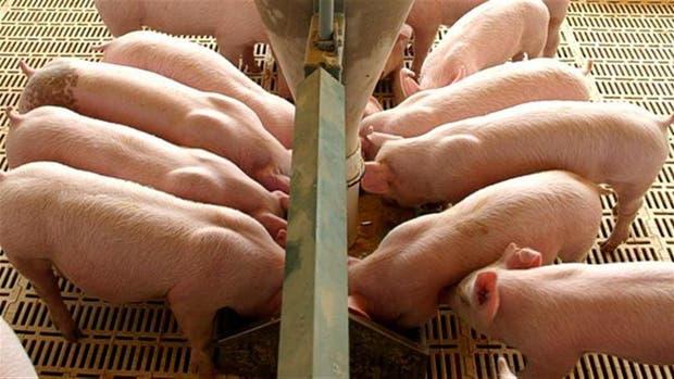 Inspeccionarán granjas porcinas en EE.UU.