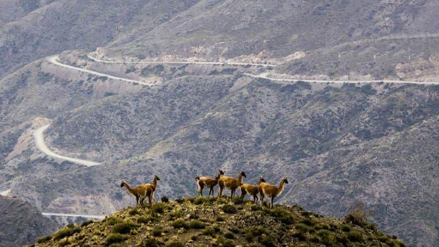 Villavicencio, Mendoza.- Con sus 72.000 hectáreas, es una de las más grandes del país
