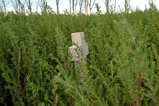 La cruz de una tumba entre los arbustos, el reflejo del abandono del cementerio del lago Epecuén que quedó bajo agua en 1985. Foto: LA NACION / Mauricio Giambartolomei