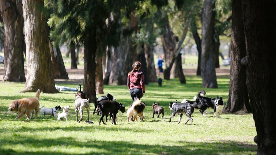 Una norma prohíbe pasear más de ocho canes en simultáneo. Foto: LA NACION / Maxie Amena