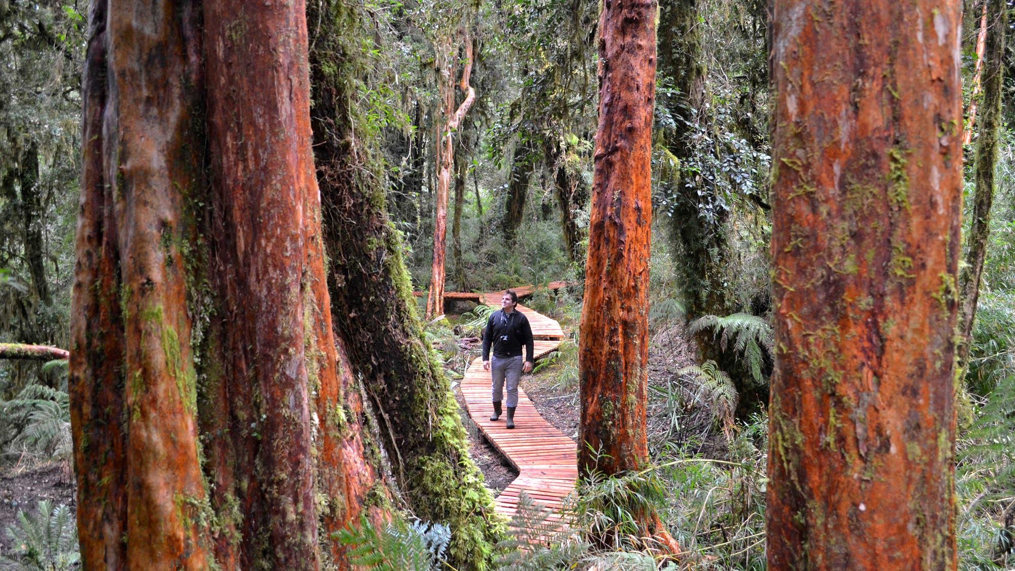Los parques de Chile que hay que descubrir