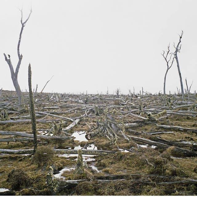 Bruma incluye imágenes de tierras ocupadas en la campaña al desierto, basurales en Río Grande y un bosque muerto de lengas en Tolhuin, en Tierra del Fuego