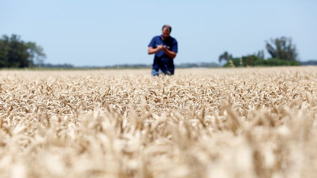 Sin trabas para exportar y con mayor producción crecieron los embarques del cereal