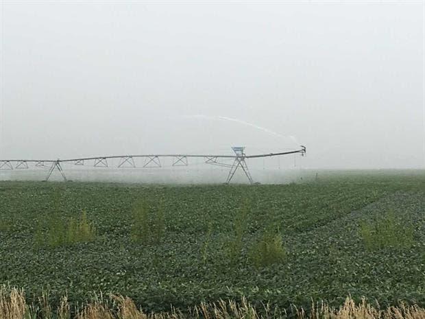 Hubo sorpresa tras el informe del USDA sobre el estado de los cultivos en ese país