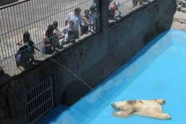 El oso Arturo, sofocado en el zoo de Mendoza