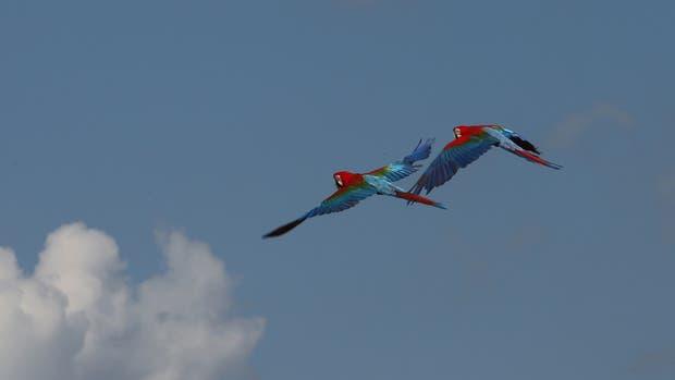Por primera vez, pudieron volar a más de 4 metros de altura