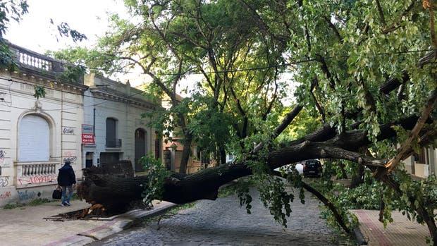 La caída de árboles complicó el tendido eléctrico