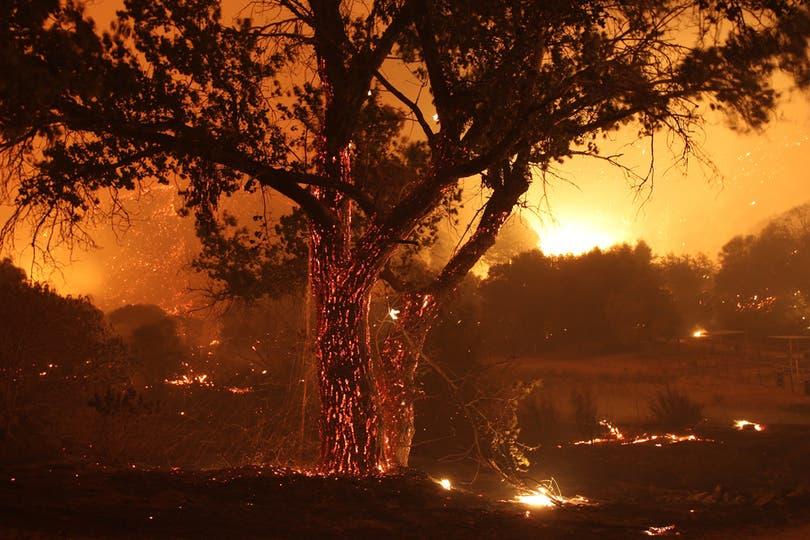 Cientos de árboles se perdieron durante el desvastador incendio. Foto: AFP