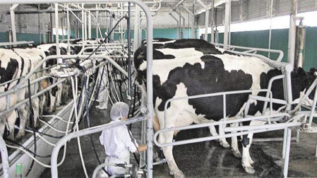 La lechería padece los efectos de la inundación. Foto: LA NACION