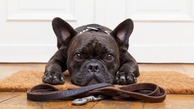 Terapias alternativas para mascotas: psicología, reiki, acupuntura y homeopatía