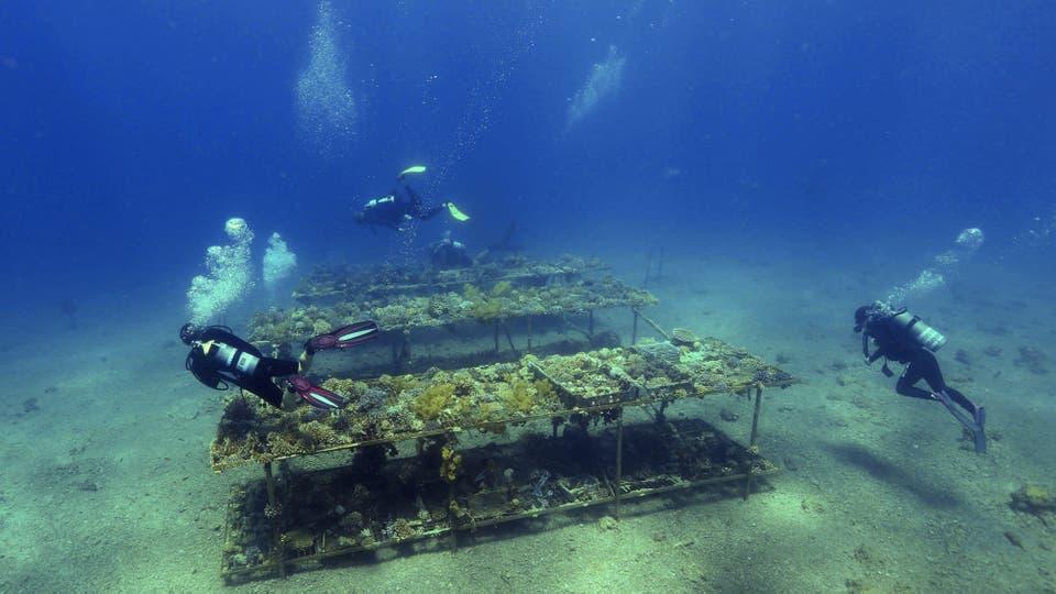 Investigadores del Instituto Interuniversitario de Ciencias del Mar en Eilat, la ciudad balnearia sureña de Israel, monitorean el crecimiento de los corales mientras bucean