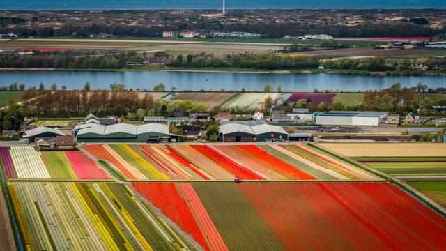 Vista del Mar del Norte y los campos de tulipanes de Keukenhof, en Lisse, a unos 20 kilómetros de Amsterdam,