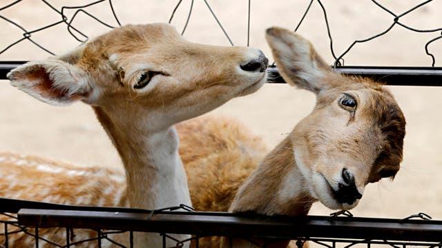El Zoo declara una colección de 2000 animales. Foto: LA NACION / Fernando Gutierrez