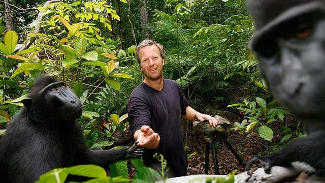 """Slater afirmó que tuvo que ganarse la confianza de los monos durante varios días antes de poder acercarse ellos lo suficiente para tomar el """"selfie"""""""