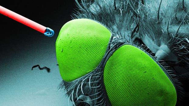 La cámara junto a la cabeza de una mosca, para tener referencia de su tamaño