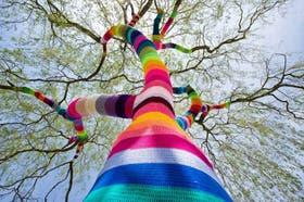 En Velbert, Alemania, un árbol vestido de arco iris