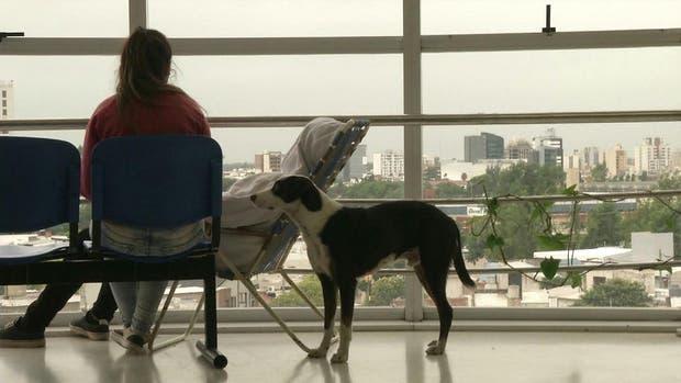 El perro espera a su dueño hace tres meses