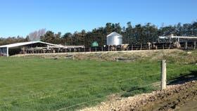 Pastura de rye grass de alta producción, junto a una instalación de ordeñe calesita con 60 bajadas