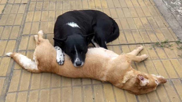 El compañerismo animal quedó en evidencia en esta historia que se viralizó en Facebook