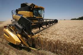 Denuncian ingreso ilegal de trigo desde Uruguay