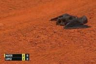 'BatiMayer': el murciélago que voló en pleno partido en el torneo de Madrid