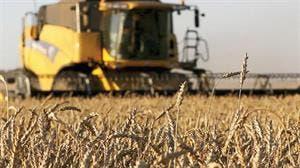Mejora de precios para el cereal