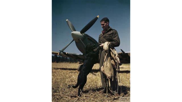El piloto de combate con la mas alta calificación de la RAF, el Wing Commander James 'Johnnie Johnson, con su perro Sally en el campo de aterrizaje Bazenville, Normandía, julio de 1944.