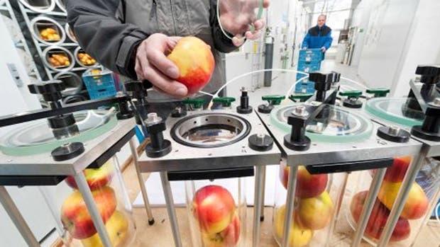 La universidad holandesa, realiza ensayos y estudios para mejorar la logística de los productos perecederos
