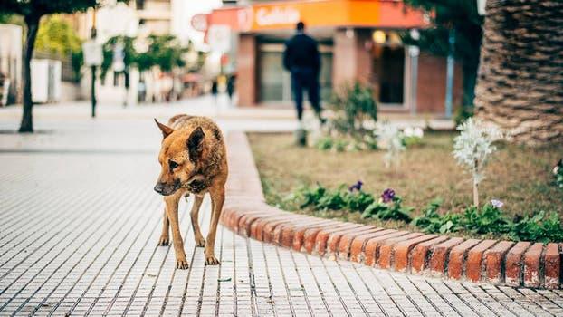 Raúl, el perro que durante catorce años hizo de la Casa de Gobierno de La Rioja su hogar. Foto: Facebook