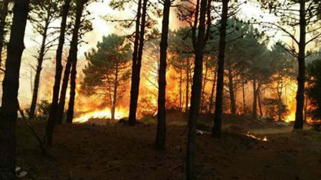 No se sabe aún el origen del fuego, pero se calcula cree que puede ser intencional. Foto: DyN