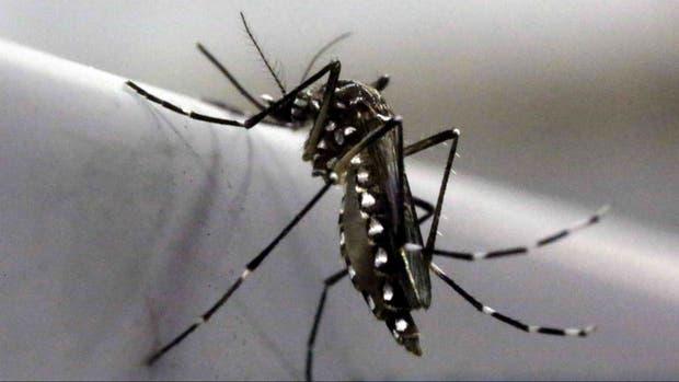 Confirman el primer caso pediátrico de chikungunya en Santa Fe
