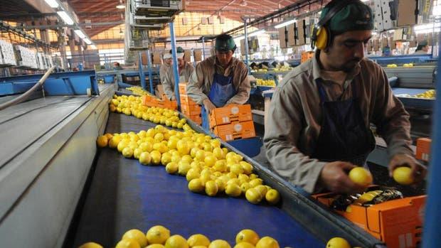La Argentina empezará a exportar limones a México por primera vez en su historia