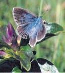 Una mariposa que fue oruga