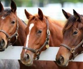 Buscan frenar el robo de caballos en la provincia