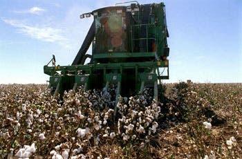 Chaco perdió el primer lugar como provincia productora del cultivo