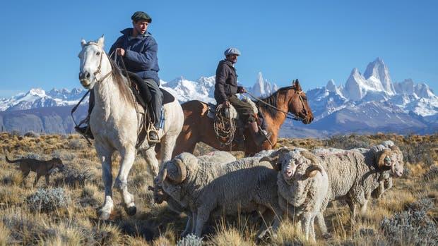Pioneros de la producción ovina