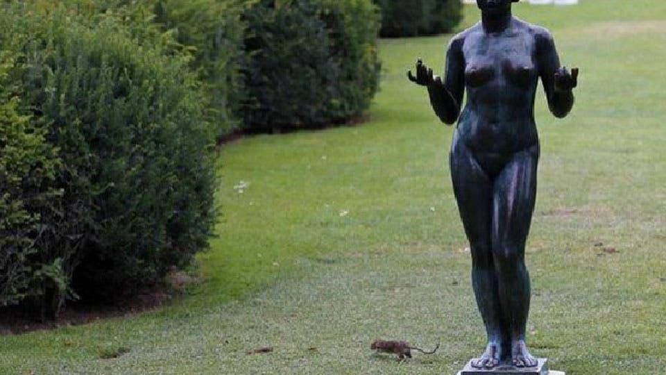 Alerta en par s por una invasi n de ratas cierran parques for Ahuyentar ratas jardin