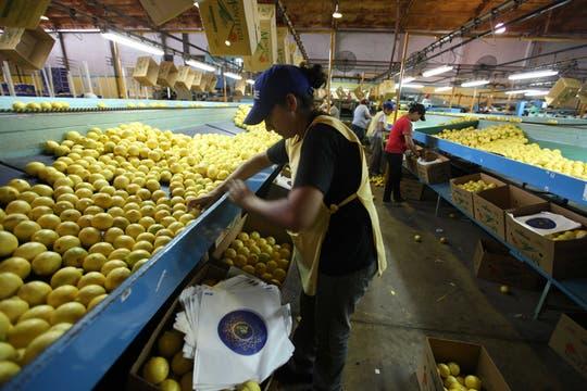 Los trabajadores de La Moraleja continúan con sus tareas diarias pese al escándalo que estalló es España. Foto: LA NACION / Fernando Font
