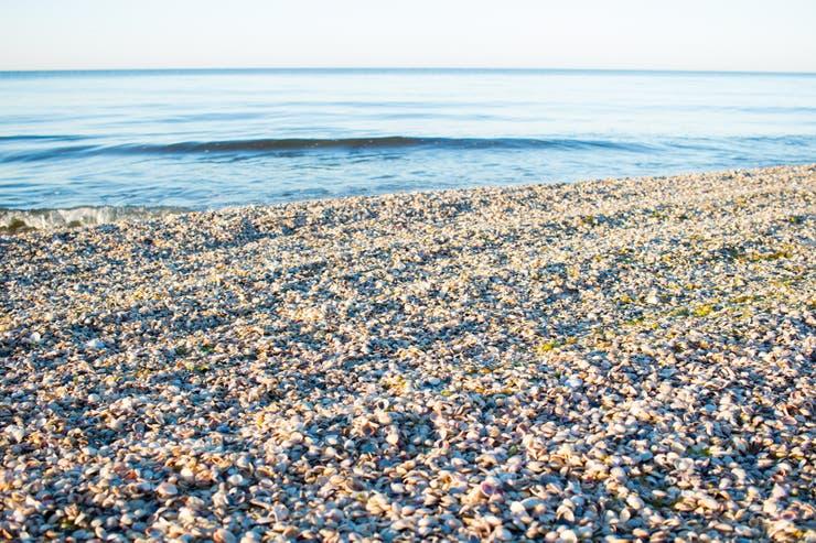 En las playas uruguayas no ocurre lo mismo ya que se respetan los tiempos que las almejas necesitan en playas especiales
