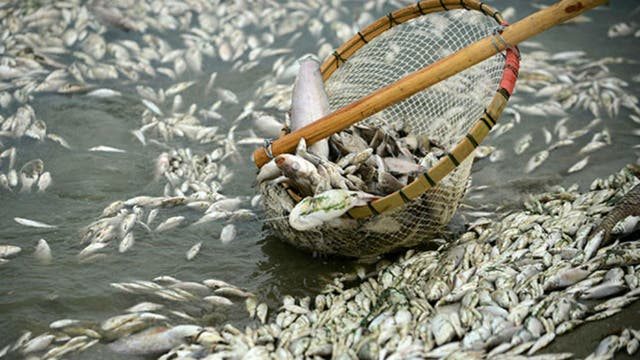 Se calcula que son más de 250 toneladas de pescados