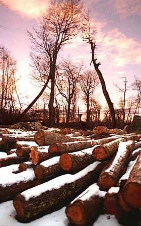 El estudio del bosque resulta esencial para ordenar la actividad