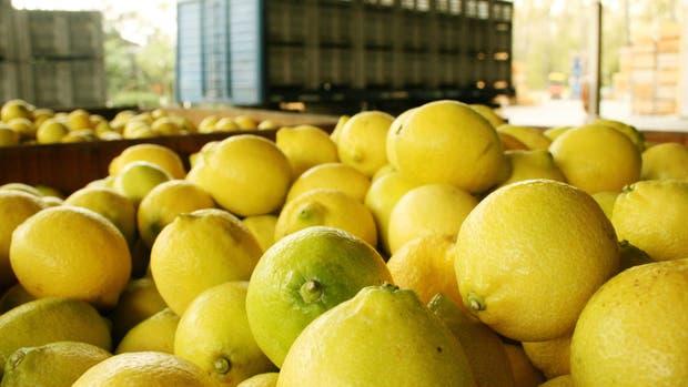 Limones argentinos: desde el viernes pueden entrar a los Estados Unidos