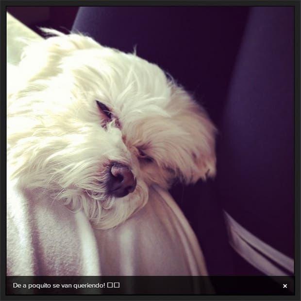 Su adorada perrita siempre tiene un lugar entre sus posts.