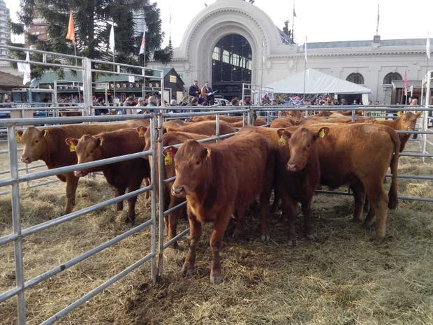 La subasta de Limousin