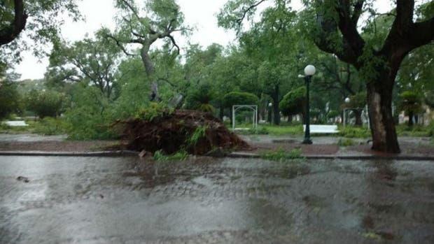 La tormenta provocó caída de árboles, carteles y tendido eléctrico