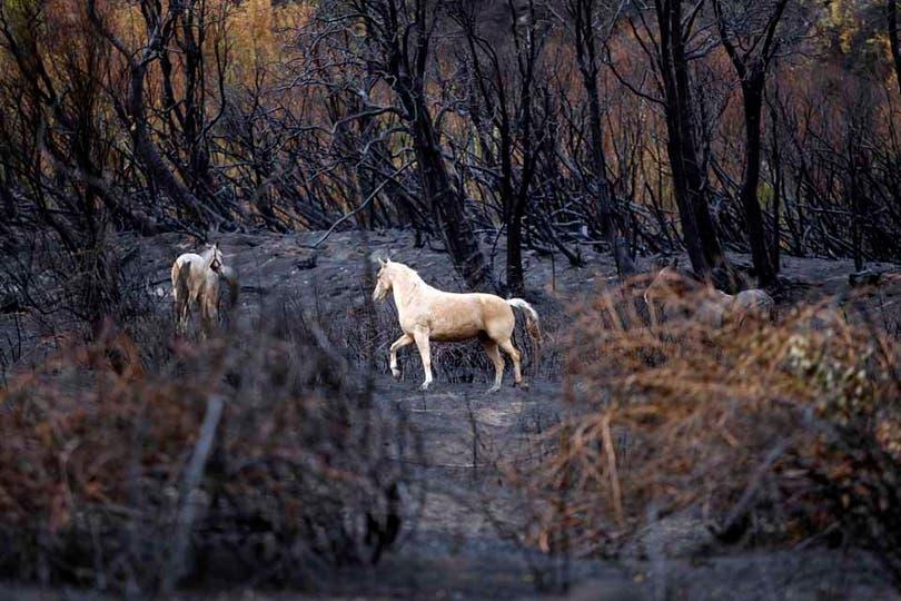 Los animales son otras de las principales véctimas. Foto: LA NACION / Emiliano Lasalvia